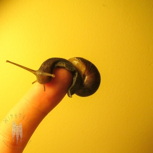 I write a natural history column called Pikes/Pines for the new blog, Capitol Hill Seattle. My favorite post this year was on Slugs and Snails.