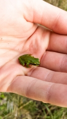 There's tons of nature on Shaw and Pacific Chorus Frogs are everywhere.