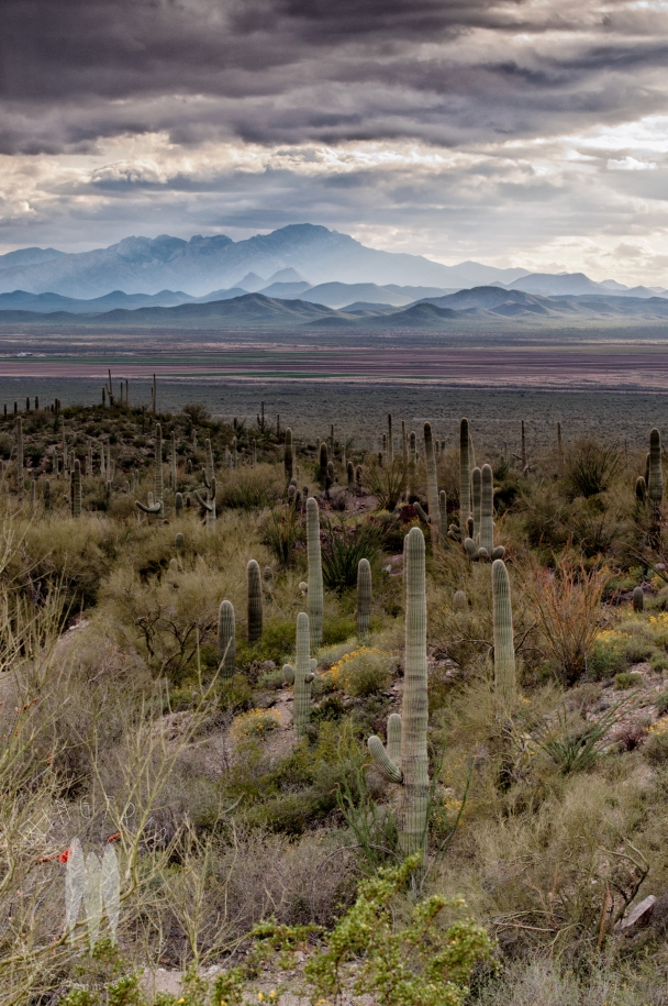 The Sonoran Desert is one of my favorite places in the world. Thanks to Saguaro National Monument, it isn't all being turned into condominiums. This is during an April storm that brought the desert from desiccated to flush with flowers and green within hours. (2012)